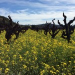 #WineTourismDay History