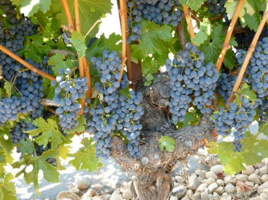 forchini-vineyards-winery