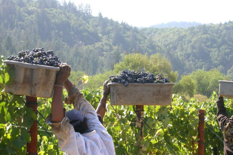 Amista Harvest 13