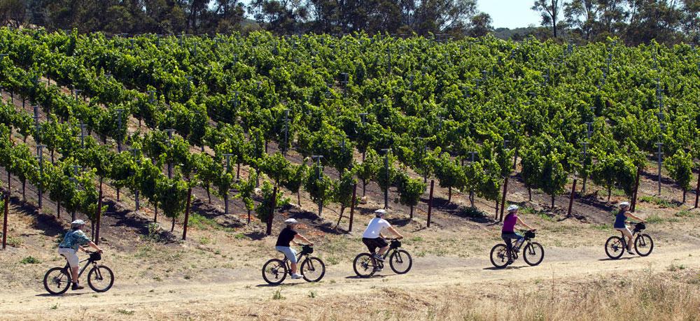 Bike along vineyard lines back roads.
