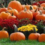 Pumpkin Spice Season