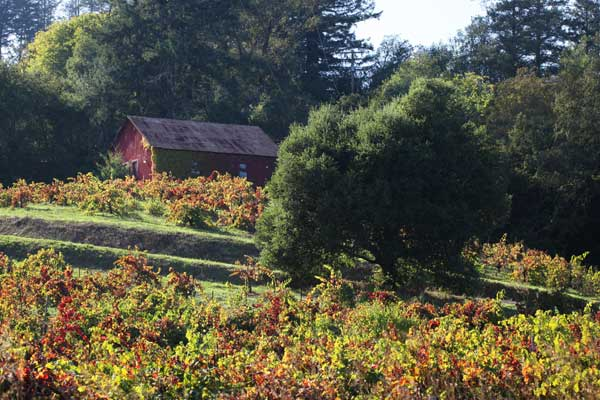 Old barn on a hillside with colorful fall vineyards below