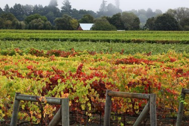 Autumn in Sonoma County's Wine Country