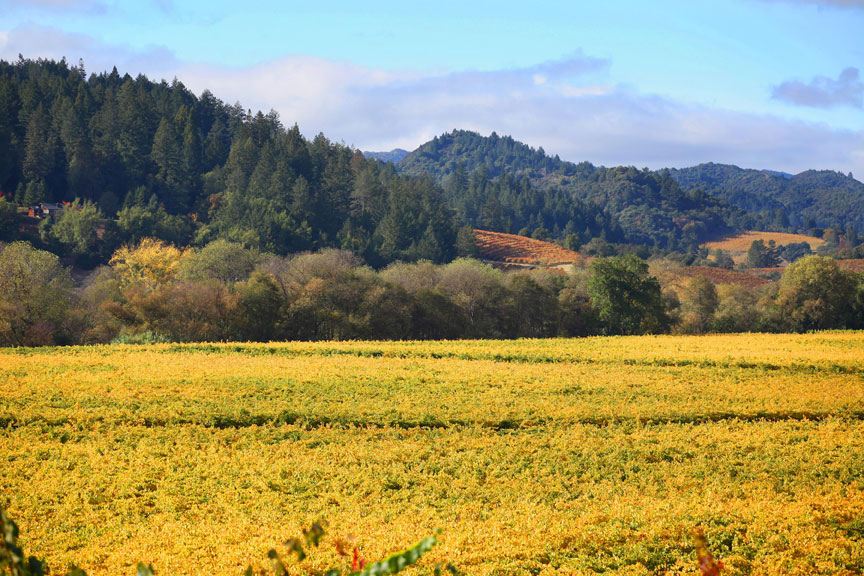 Fall scenery along the Wine Road in Northern Sonoma County