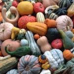 Post-Thanksgiving Wine Tasting & Events