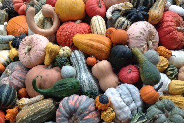Piles of squash and gourds