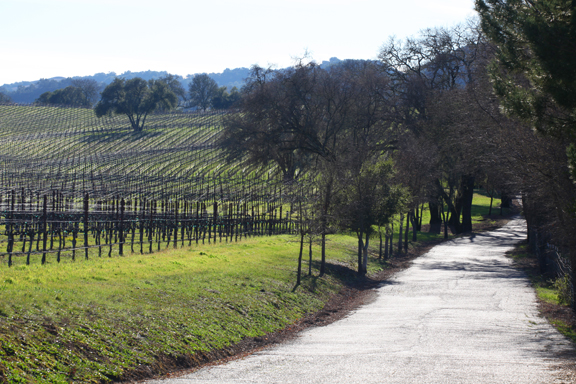Winter Vineyard Along the Wine Road
