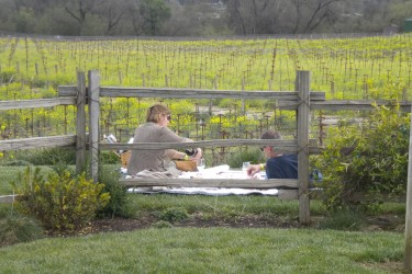 A spring picnic along the Wine Road.
