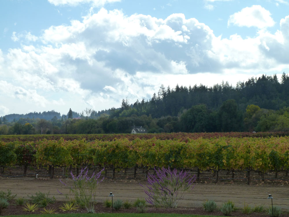 The fall vista from Comstock Winery