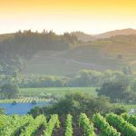 Explore California Wine Month