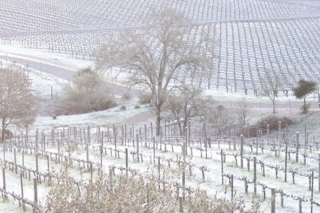 Frost covered vineyards