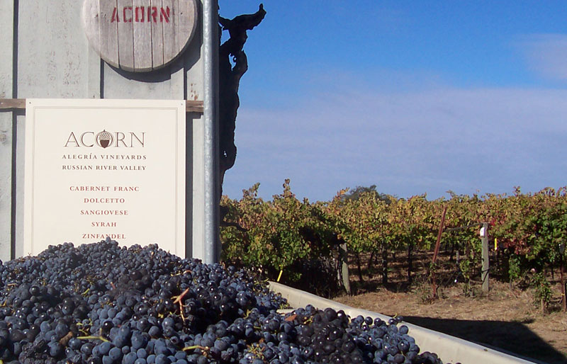 Photo of the ACORN Winery sign in from of a bin of freshly picked grapes