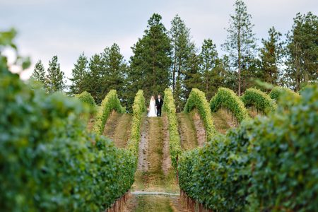 Bride and groom at the top of a vineyard