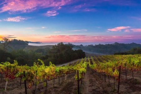 beautiful vineyard vista at sunset
