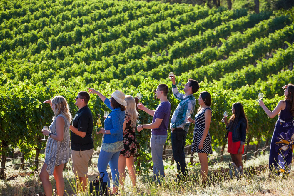 Group of people holding wine glasses in a vineyard