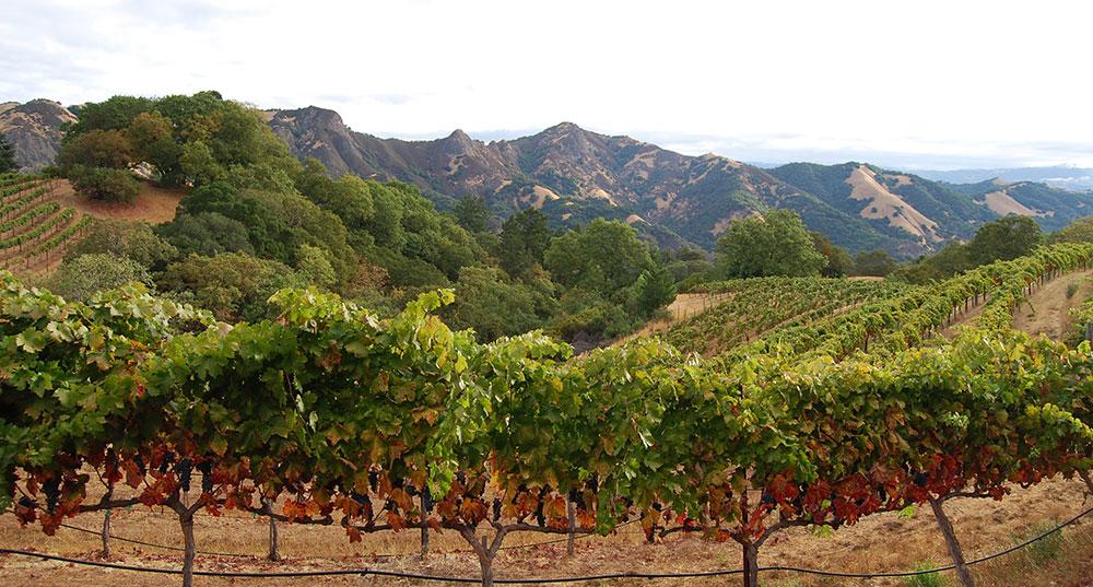 View of Rockpile vineyard