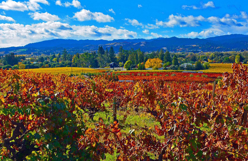 Beautiful late fall view of vineyards with mountains in the background