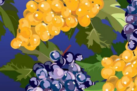 Painting of red and white grapes