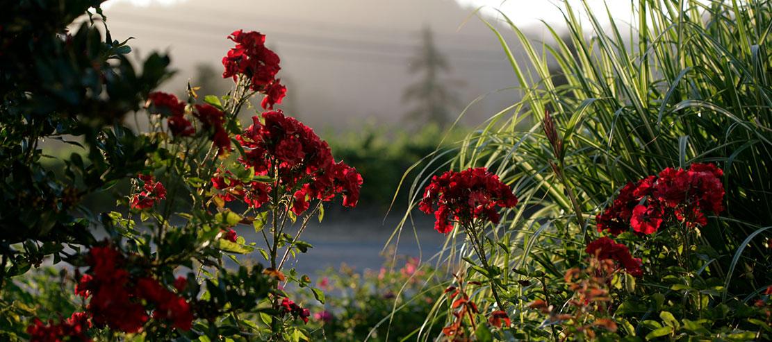 Flowers on the Korbel garden tour.