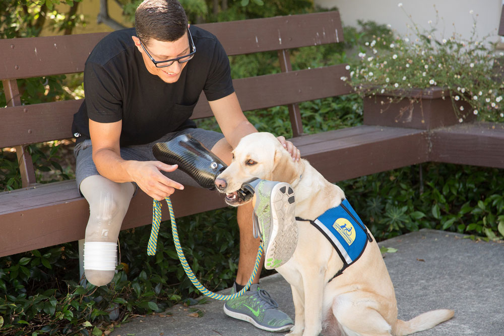 A Canine Companion holding up an artificial leg for a man on a bench.