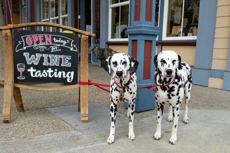 "Two Dalmatians tied to a sign that reads""Open today for Wine tasting"""