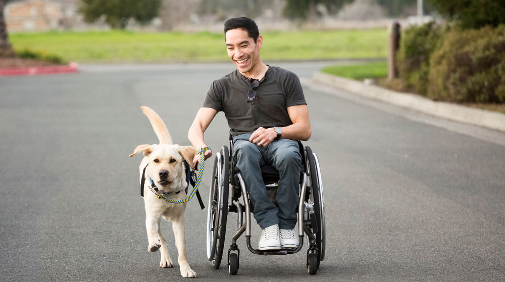 Canine Companion dog pulling a man in a wheelchair.