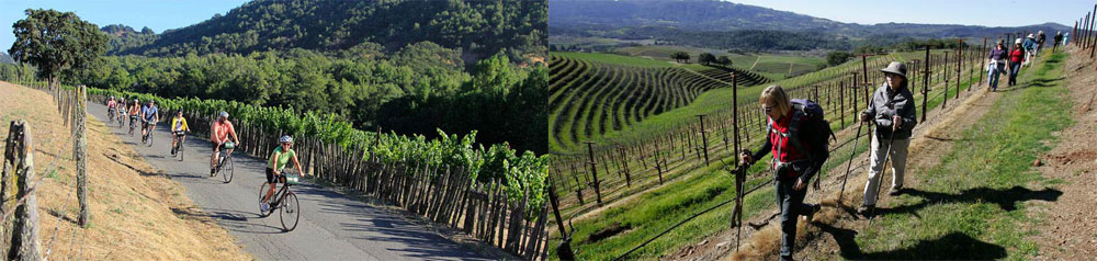Biking and hiking along vineyards are just two activities you can enjoy in Sonoma County's recreational paradise.