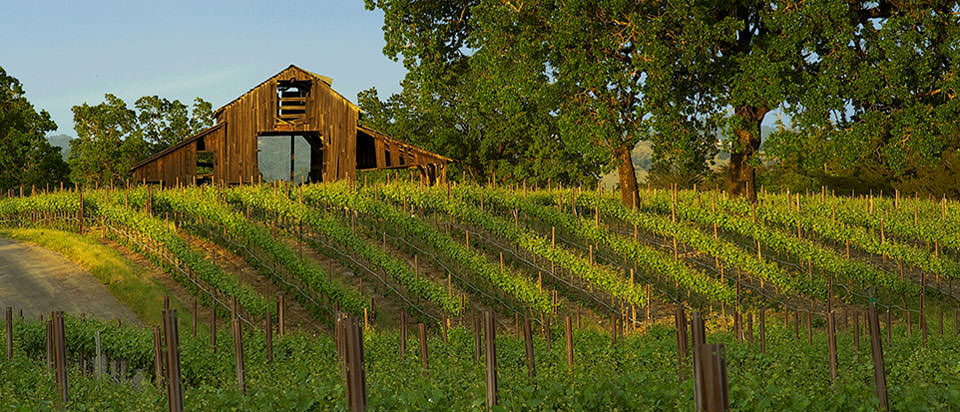 Classic old barn nestled in the vineyard.