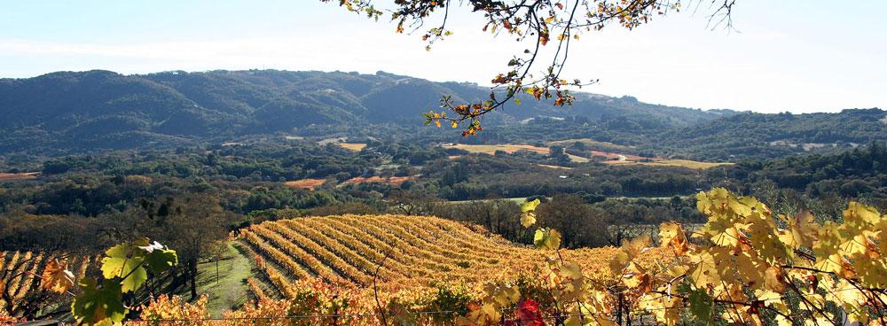 High elevation vineyard vista