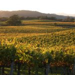 What Does That Mean? Defining Grape Growing Terms