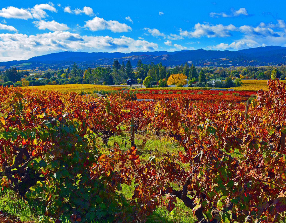 Pristine autumn day along the wine road by Jolene Patterson
