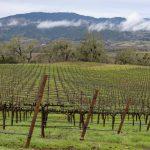 Seasons in the Vineyard: Winter Pruning