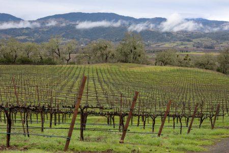 View of Jordan Winery's vineyards in the winters