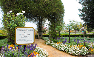 Gardens at Dry Creek Vineyards
