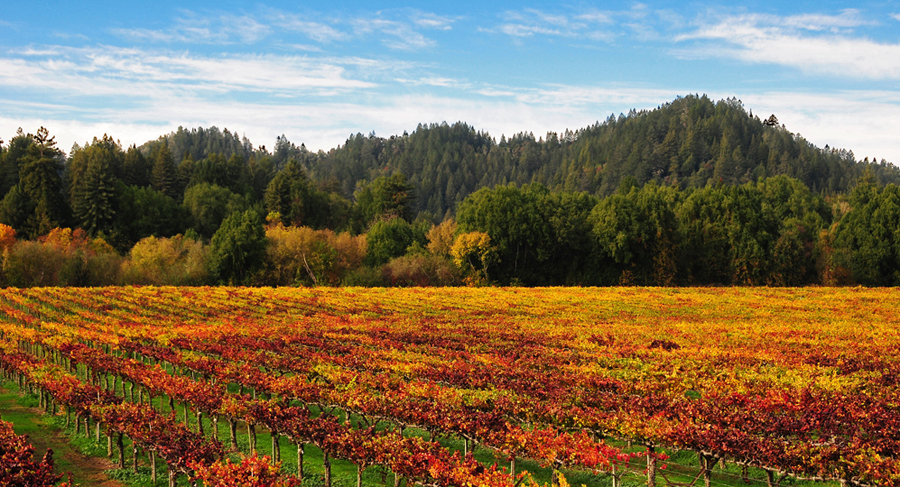 Fall vineyards and scenery along the wine road.