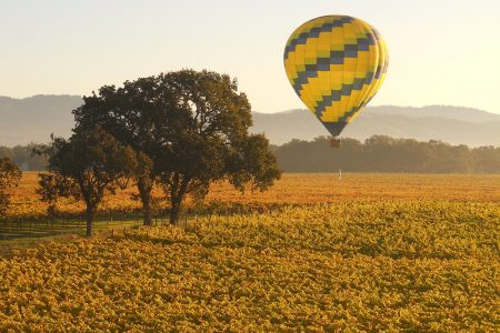 Hot air balloon landing, surrounded by vineyards.