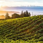 Sonoma County Selected Wine Region of the Year