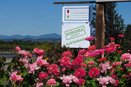 Sonoma County Vineyard with sustainable signs and summer flowers.