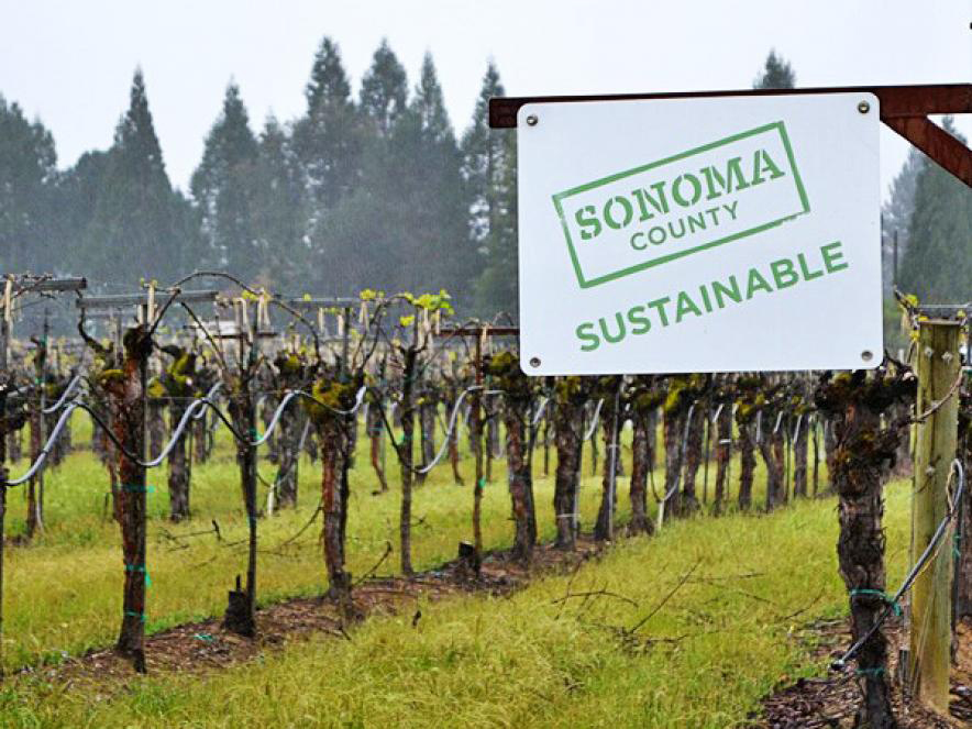 Sonoma County Sustainable sign in a vineyard.
