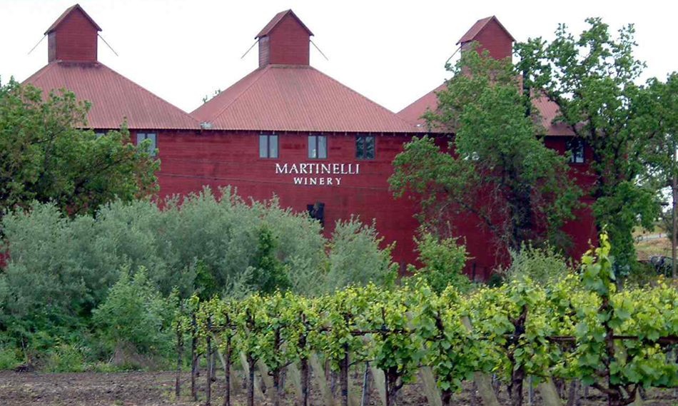 Martinelli Winery's red hops barn winery with vineyard in the foreground.